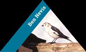 ben-nevis-logo