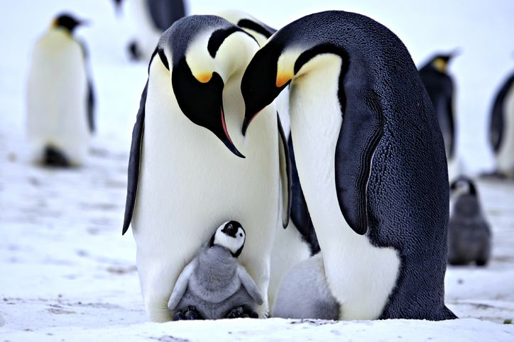 Penguins - not what you'd normally expect to see on a mountain...